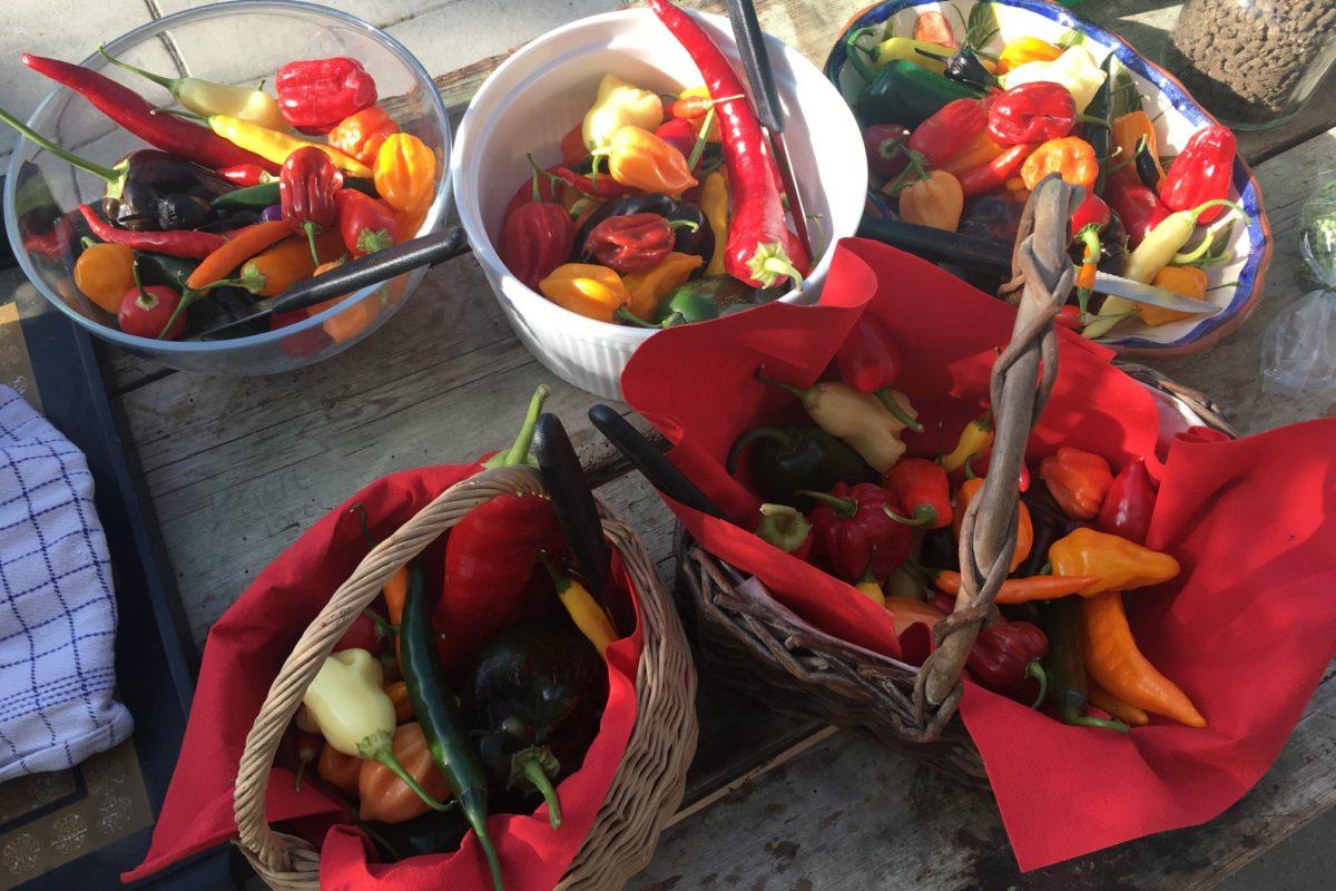 Tomat- og chilismagning